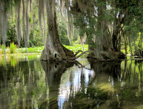 Florida's Spring Flowers and Wild Rivers