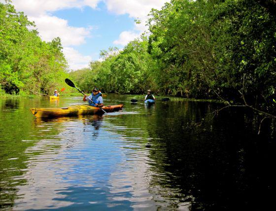 Naturalist Kayaking in Florida