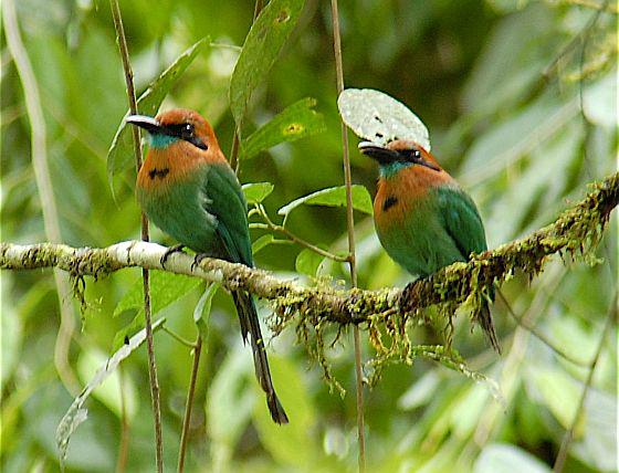 Birds in Costa Rica