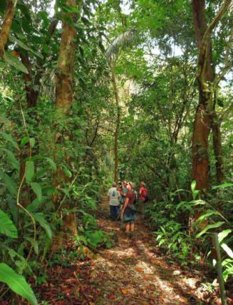 Panama Canopy: Tropical Birding at its Best
