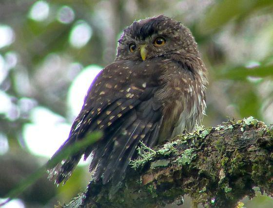 Focus on Birds in Ecuador's Highlands and Lowlands