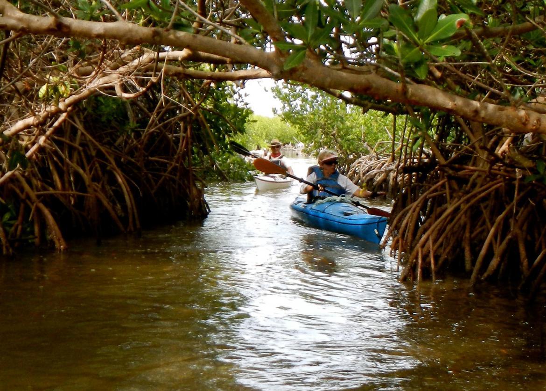 Islands In The Sun Kayaking Cayo Costa State Park