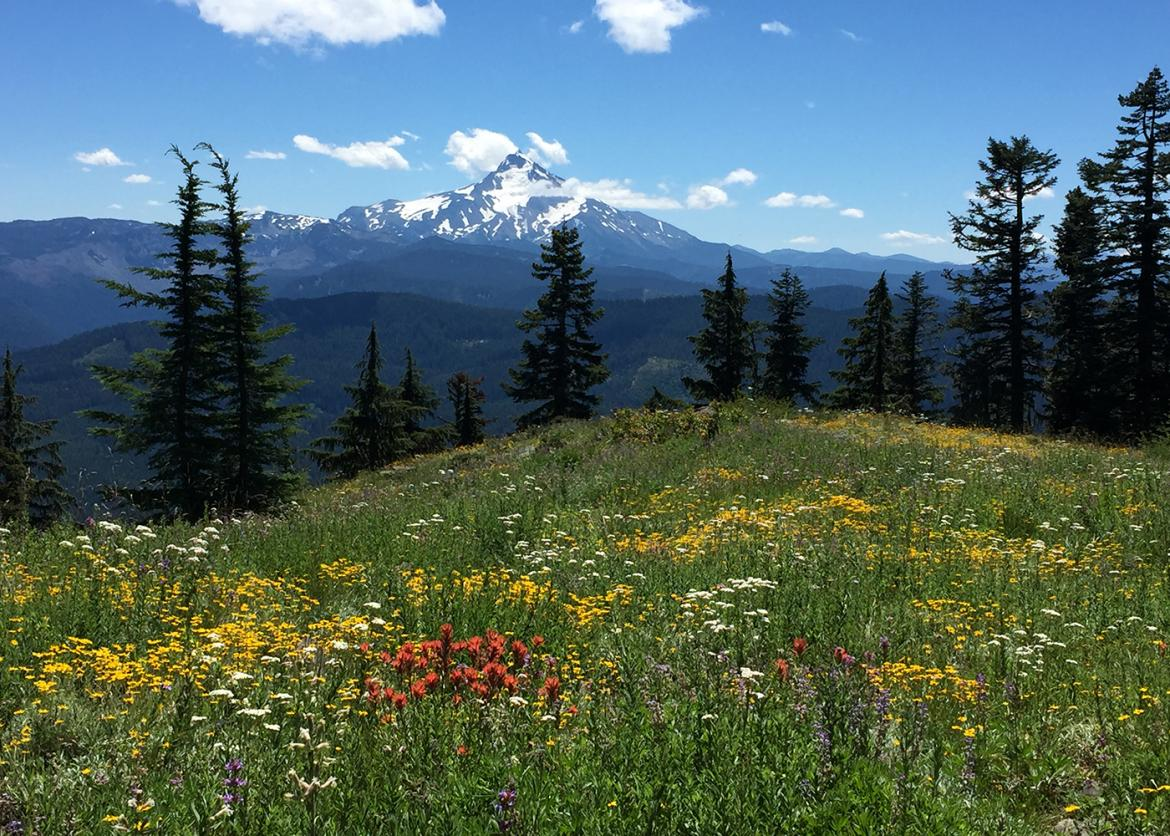 Natural Resources In The Cascade Range In Oregon