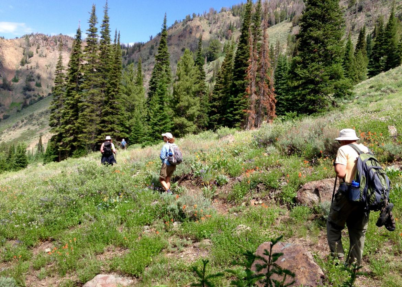 Island Lake Lodge Hiking