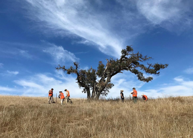 Volunteer Vacation Monterey California   Sierra Club Outings