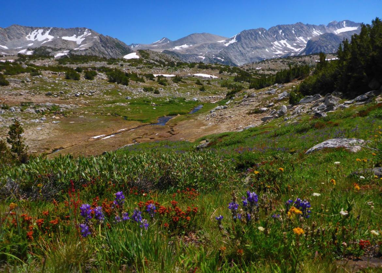 Hidden Gems of Pioneer Basin, John Muir Wilderness ...