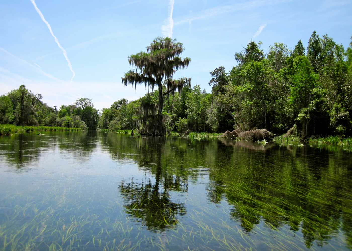 Florida cool springs wild rivers sierra club outings for Florida cool