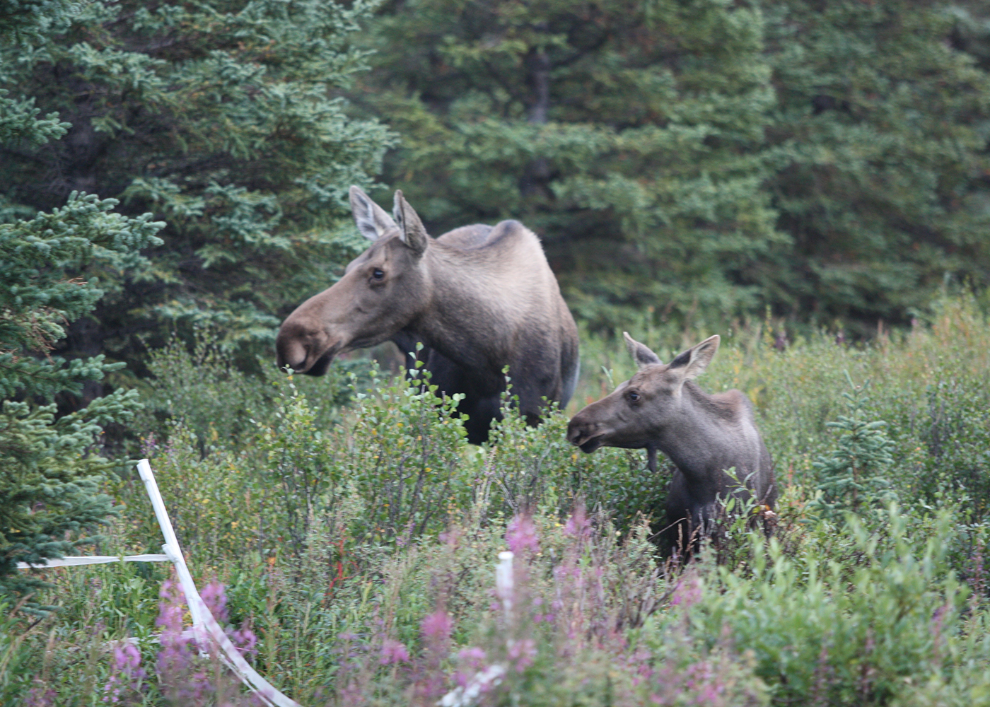denali national park chat sites Plan your trip with orbitz buy airline tickets, read reviews & reserve a hotel find deals on vacations, rental cars & cruises great prices guaranteed.