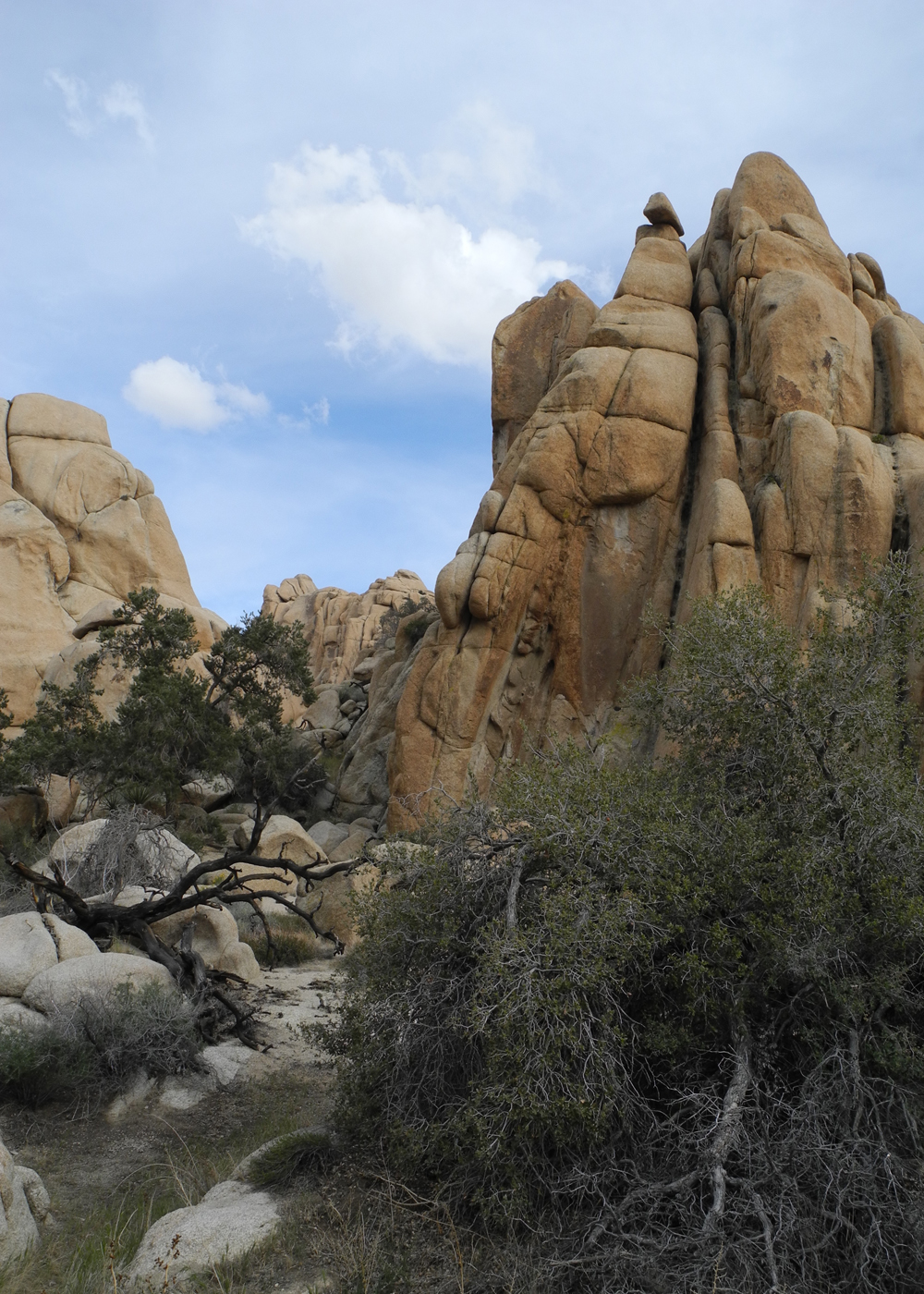 Backpack Joshua Tree California Sierra Club Outings