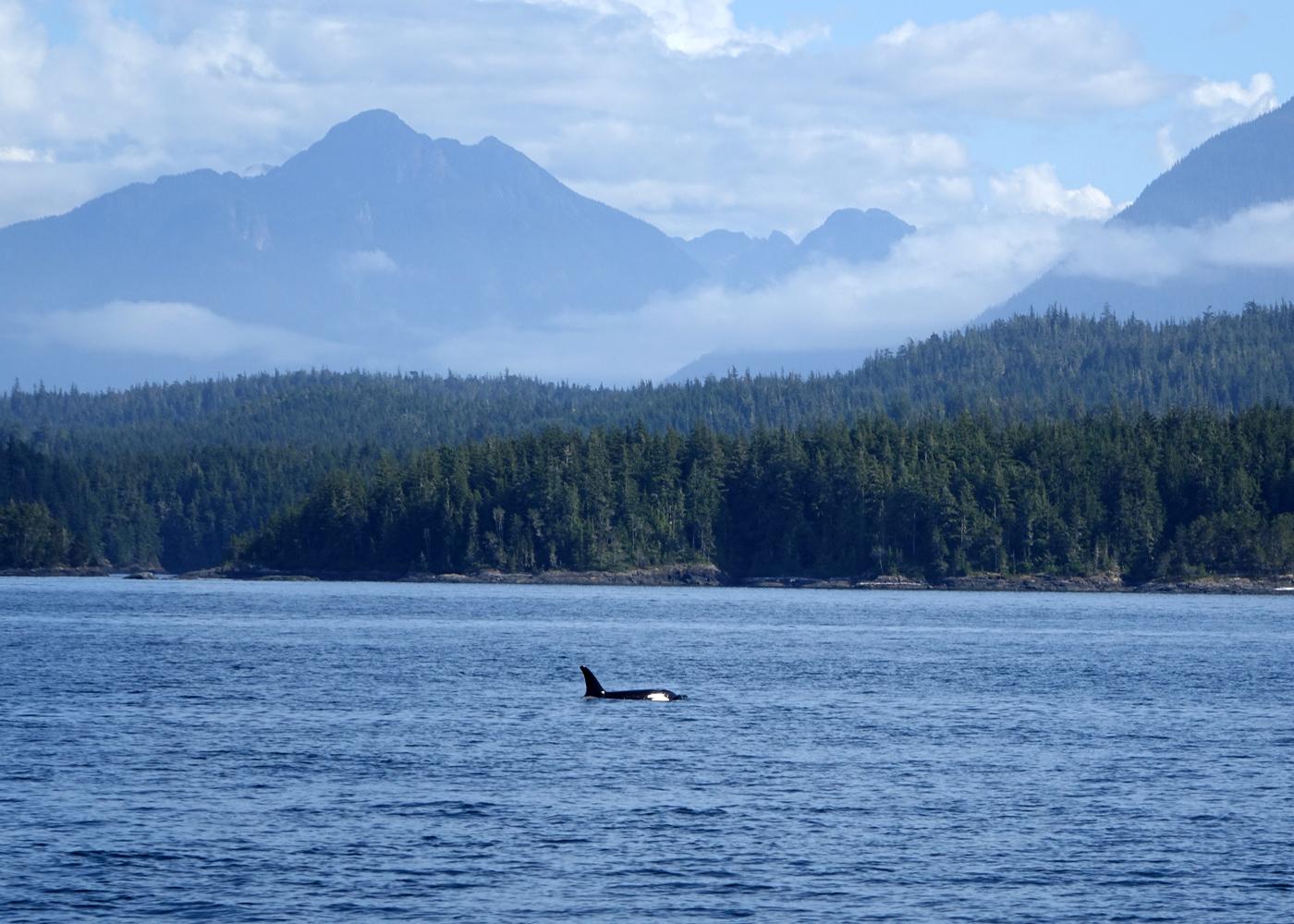 Orcas Island Sailing Club