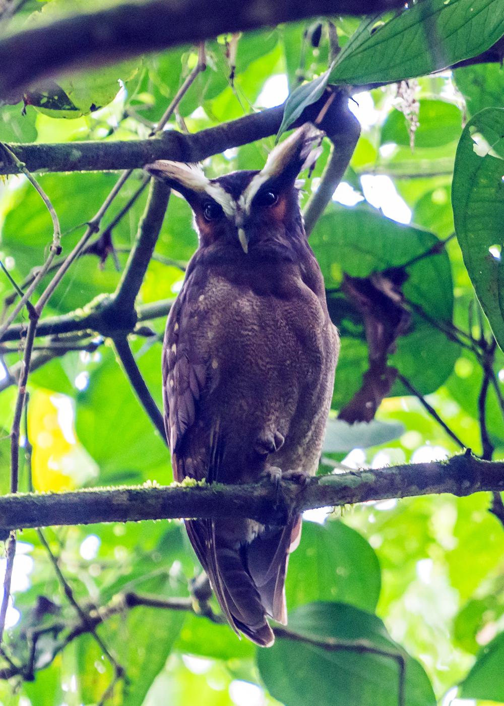 Panama Birds And Butterflies Tour Sierra Club